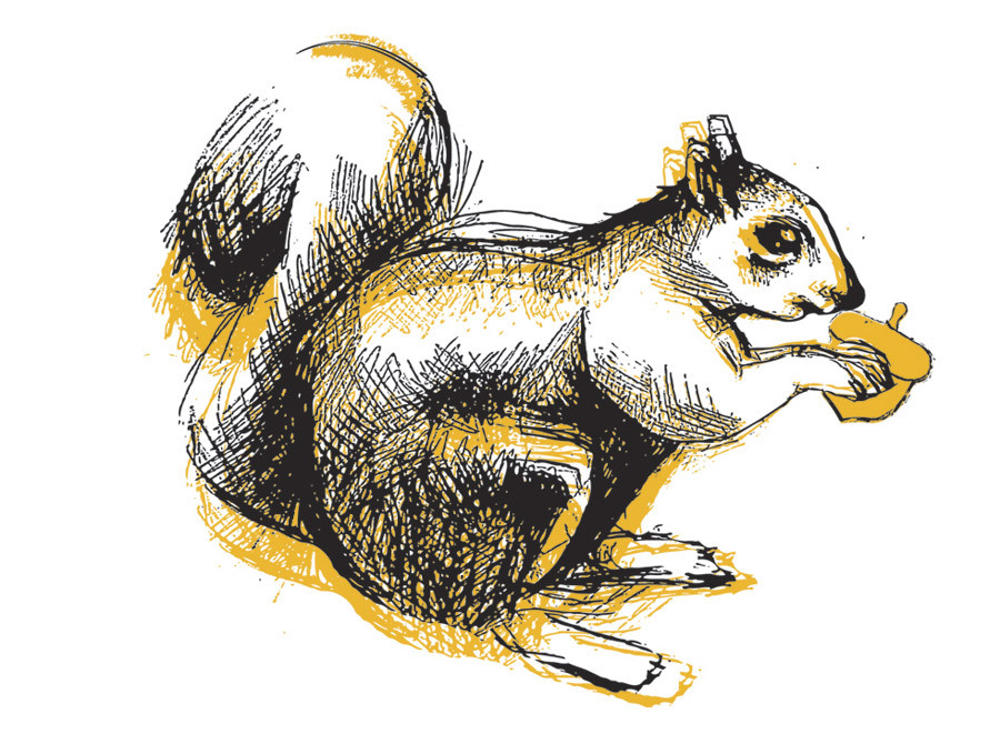 How to find Yoco Eatery? {Follow the Squirrel}
